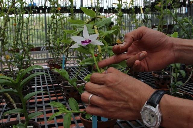 Mua 3 cây lan đột biến gene giá 32 tỷ, người thật việc thật ở Bình Phước-5