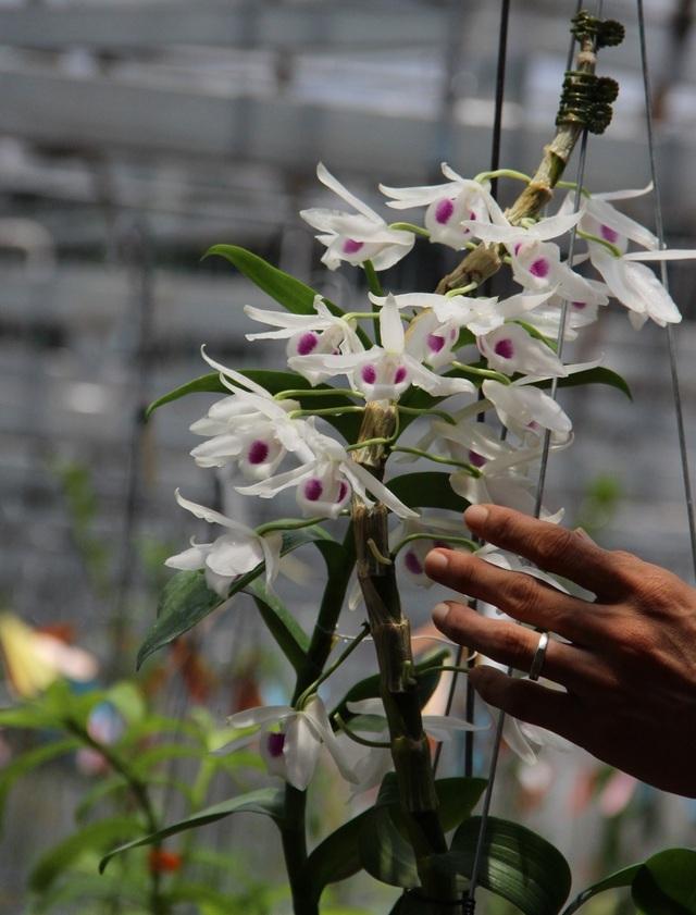 Mua 3 cây lan đột biến gene giá 32 tỷ, người thật việc thật ở Bình Phước-6
