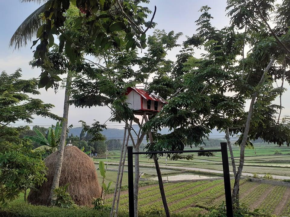 Đẹp giản dị ngôi nhà cấp 4 với chi phí 650 triệu con trai kiến trúc sư xây tặng cha mẹ dưỡng già ở Quảng Nam-12