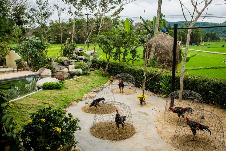 Đẹp giản dị ngôi nhà cấp 4 với chi phí 650 triệu con trai kiến trúc sư xây tặng cha mẹ dưỡng già ở Quảng Nam-14