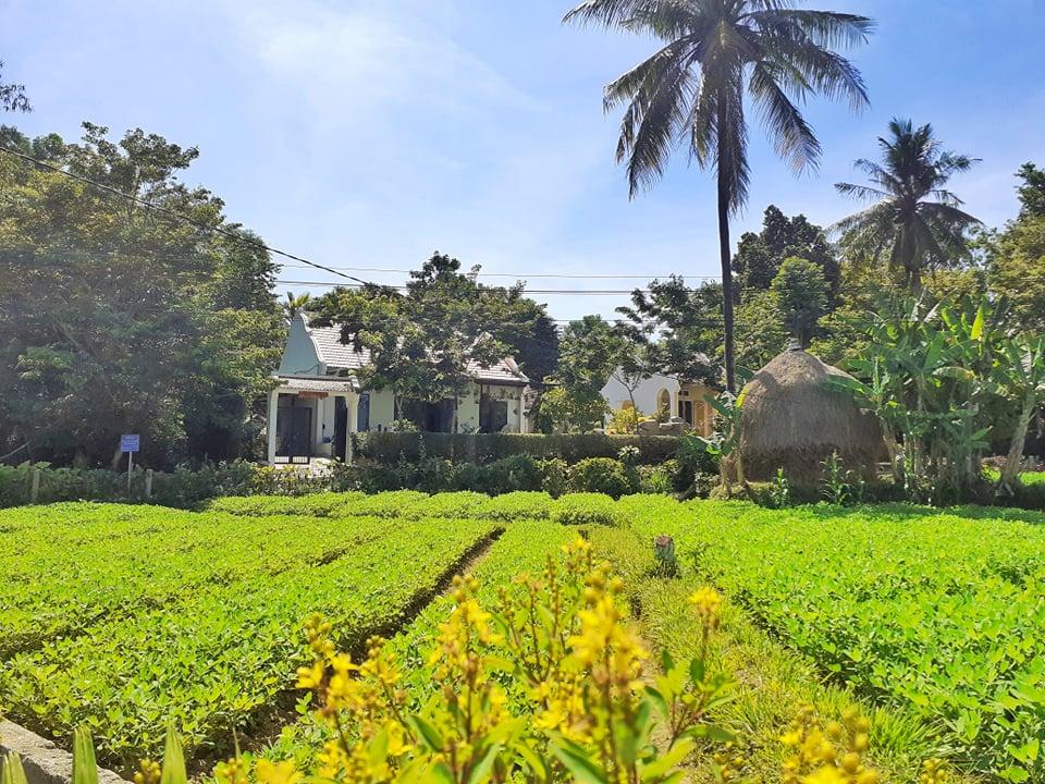 Đẹp giản dị ngôi nhà cấp 4 với chi phí 650 triệu con trai kiến trúc sư xây tặng cha mẹ dưỡng già ở Quảng Nam-16