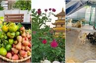 Sài Gòn: Mẹ đảm xây dựng cả một ' trang trại trên không', đủ cả rau sạch, gà sạch đến hoa đẹp trên sân thượng của gia đình