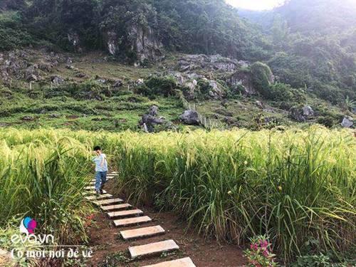 """Bỏ phố lên rừng"""", vợ chồng 8X đến Mộc Châu dựng nhà sàn, trồng lúa nương trong vườn 5000m²-8"""