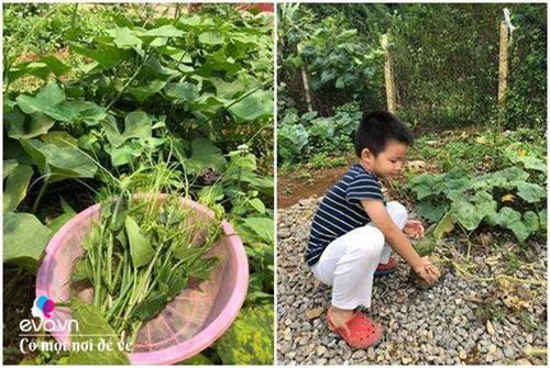 """Bỏ phố lên rừng"""", vợ chồng 8X đến Mộc Châu dựng nhà sàn, trồng lúa nương trong vườn 5000m²-9"""