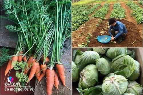"""Bỏ phố lên rừng"""", vợ chồng 8X đến Mộc Châu dựng nhà sàn, trồng lúa nương trong vườn 5000m²-11"""