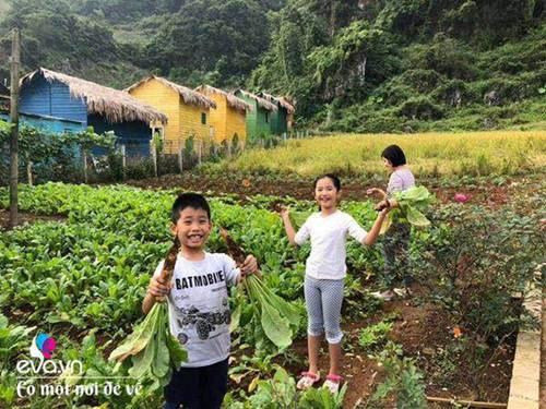 """Bỏ phố lên rừng"""", vợ chồng 8X đến Mộc Châu dựng nhà sàn, trồng lúa nương trong vườn 5000m²-12"""