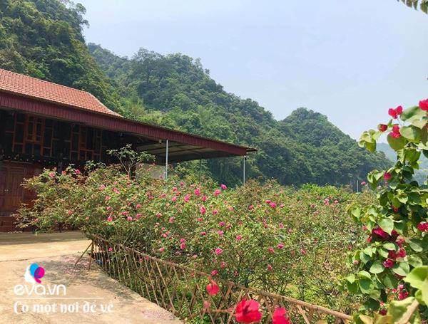 """Bỏ phố lên rừng"""", vợ chồng 8X đến Mộc Châu dựng nhà sàn, trồng lúa nương trong vườn 5000m²-18"""