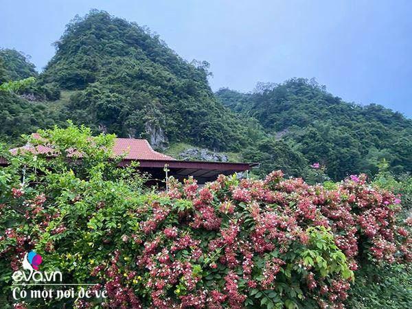 """Bỏ phố lên rừng"""", vợ chồng 8X đến Mộc Châu dựng nhà sàn, trồng lúa nương trong vườn 5000m²-19"""