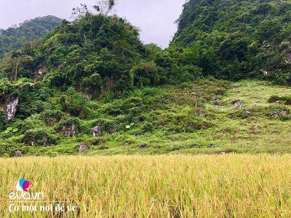 """Bỏ phố lên rừng"""", vợ chồng 8X đến Mộc Châu dựng nhà sàn, trồng lúa nương trong vườn 5000m²-20"""
