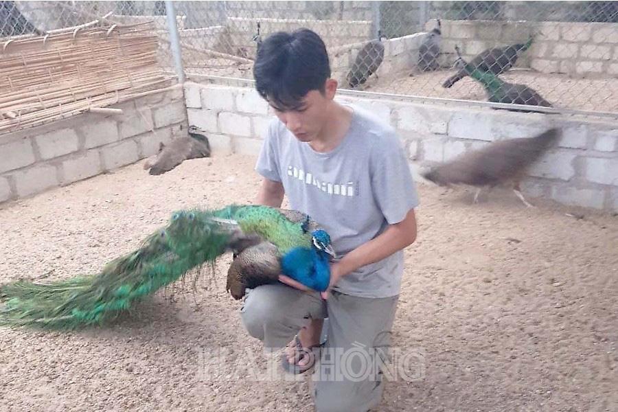 Chàng trai Hải Phòng nuôi chim phong thủy, chỉ bán lông đuôi đã kiếm bộn tiền-1