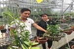 Chiêm ngưỡng cây sanh ngọa hổ tàng long 30 tỷ đồng của đại gia Toàn đôla ở Phú Thọ-12