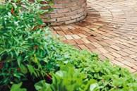 3 cách thiết thực giúp bạn tạo vườn rau xanh sạch trong nhà phố chật hẹp