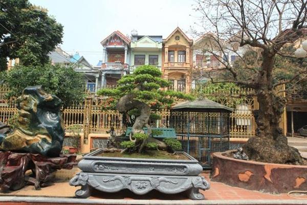 Chiêm ngưỡng cây sanh ngọa hổ tàng long 30 tỷ đồng của đại gia Toàn đôla ở Phú Thọ-2