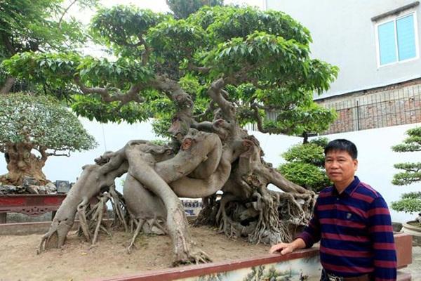 Chiêm ngưỡng cây sanh ngọa hổ tàng long 30 tỷ đồng của đại gia Toàn đôla ở Phú Thọ-4