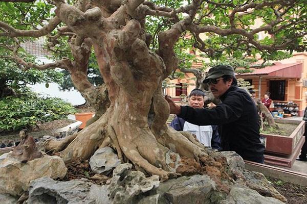 Chiêm ngưỡng cây sanh ngọa hổ tàng long 30 tỷ đồng của đại gia Toàn đôla ở Phú Thọ-7