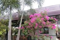 Ngôi nhà cấp 4 xây dựng đơn giản nhưng sở hữu khoảng sân rộng đủ để ngắm trọn vẻ đẹp xanh tươi của thiên nhiên xung quanh