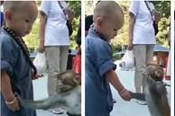 Khỉ con gây xúc động khi liên tục an ủi tiểu hòa thượng đeo lắc bạc vì lầm tưởng đó là xiềng xích giống trên cổ mình