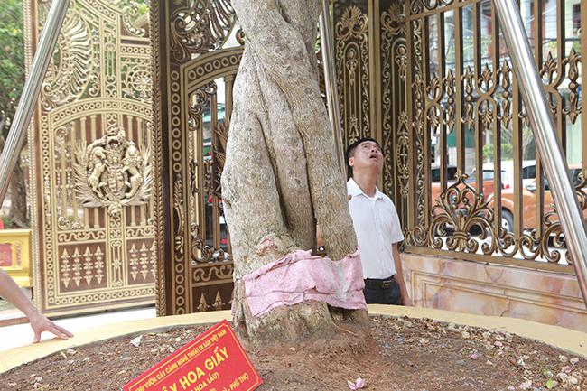 Loại cây mọc hoang ven đường, đại gia mua giá 3 tỷ gây xôn xao-11