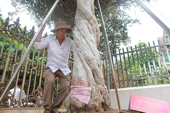 Loại cây mọc hoang ven đường, đại gia mua giá 3 tỷ gây xôn xao-3