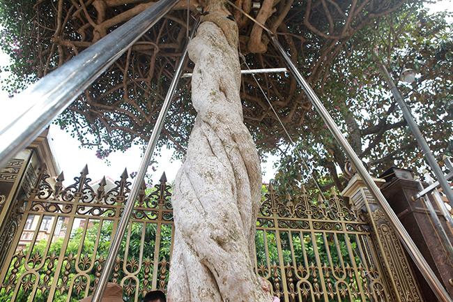 Loại cây mọc hoang ven đường, đại gia mua giá 3 tỷ gây xôn xao-5