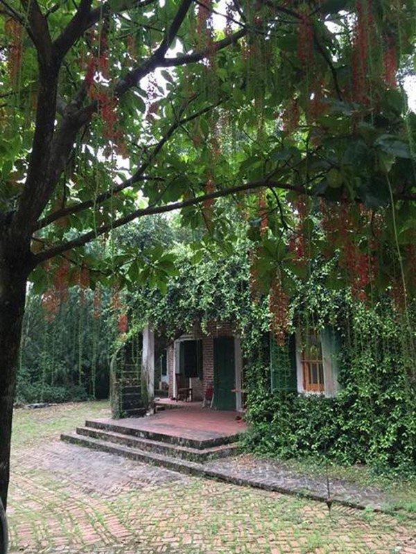 Nhà vườn bạt ngàn của 2 nghệ sĩ miền Bắc: Rau củ đầy đủ, có nhà còn không có điện-8