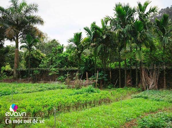 Cô giáo về hưu dựng nhà sàn giữa thung lũng 7000m², tìm bình yên cách Hà Nội 49km-10