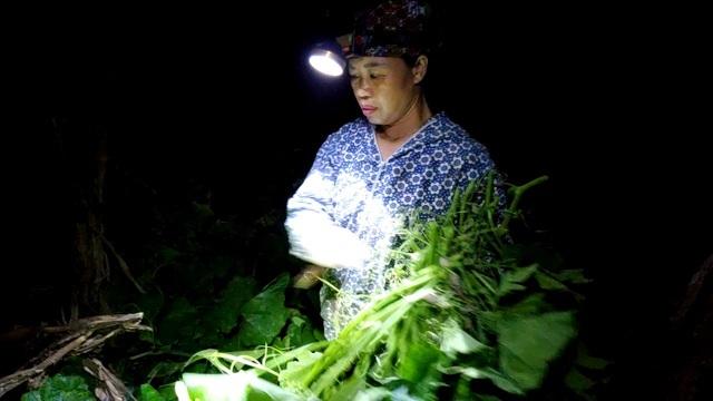 Dậy từ 2 giờ hái rau bí, bà trùm kiếm tiền triệu nơi bãi giữa sông Hồng-2