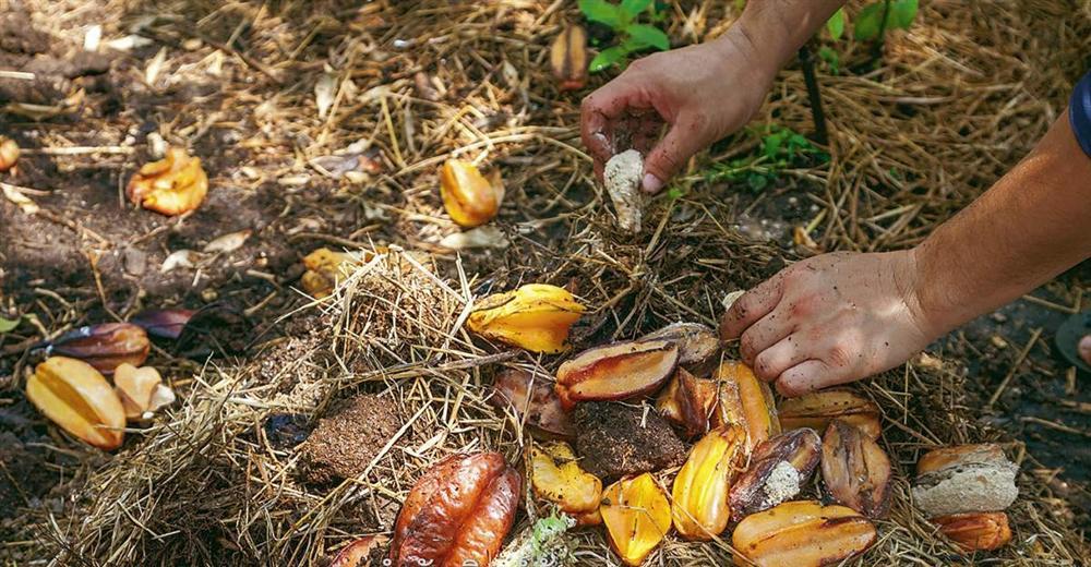 Tự làm phân bón từ thực phẩm bỏ đi, vừa tiết kiệm chi phí vừa giúp cây lớn nhanh như thổi-1