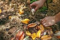 Tự làm phân bón từ thực phẩm bỏ đi, vừa tiết kiệm chi phí vừa giúp cây lớn nhanh như thổi