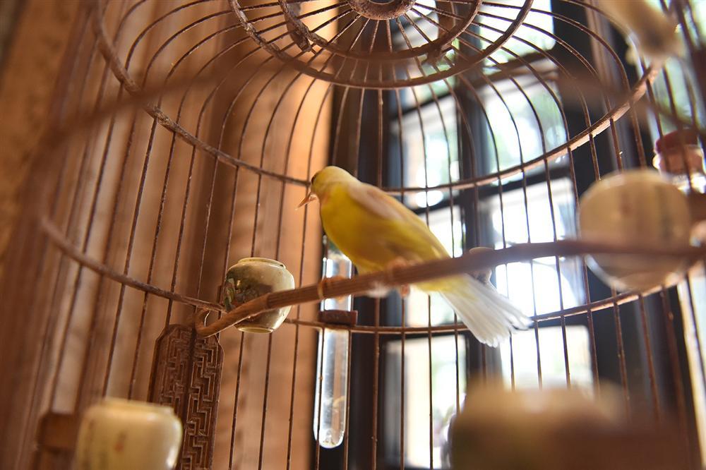 Mãn nhãn bộ sưu tập chim quý hiếm, giá tiền tỷ của vua chim màu Việt-12
