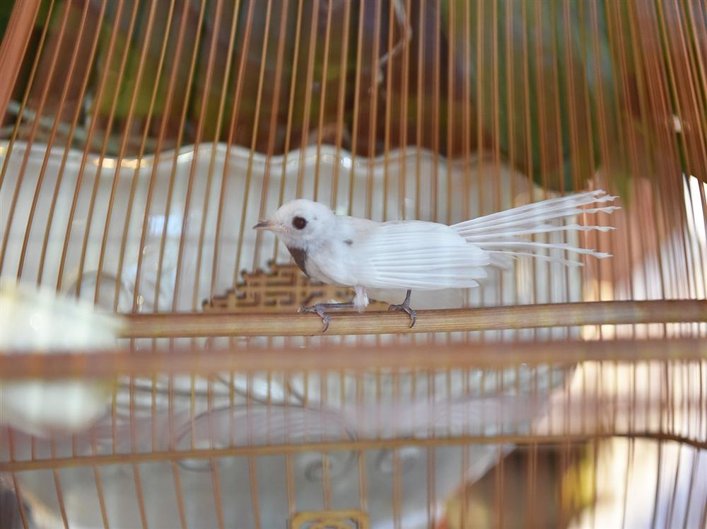 Mãn nhãn bộ sưu tập chim quý hiếm, giá tiền tỷ của vua chim màu Việt-14