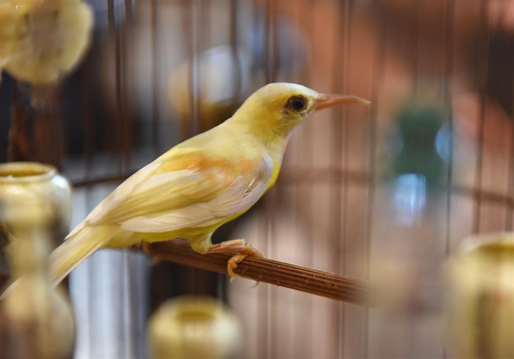 Mãn nhãn bộ sưu tập chim quý hiếm, giá tiền tỷ của vua chim màu Việt-15