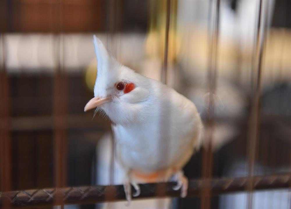 Mãn nhãn bộ sưu tập chim quý hiếm, giá tiền tỷ của vua chim màu Việt-2