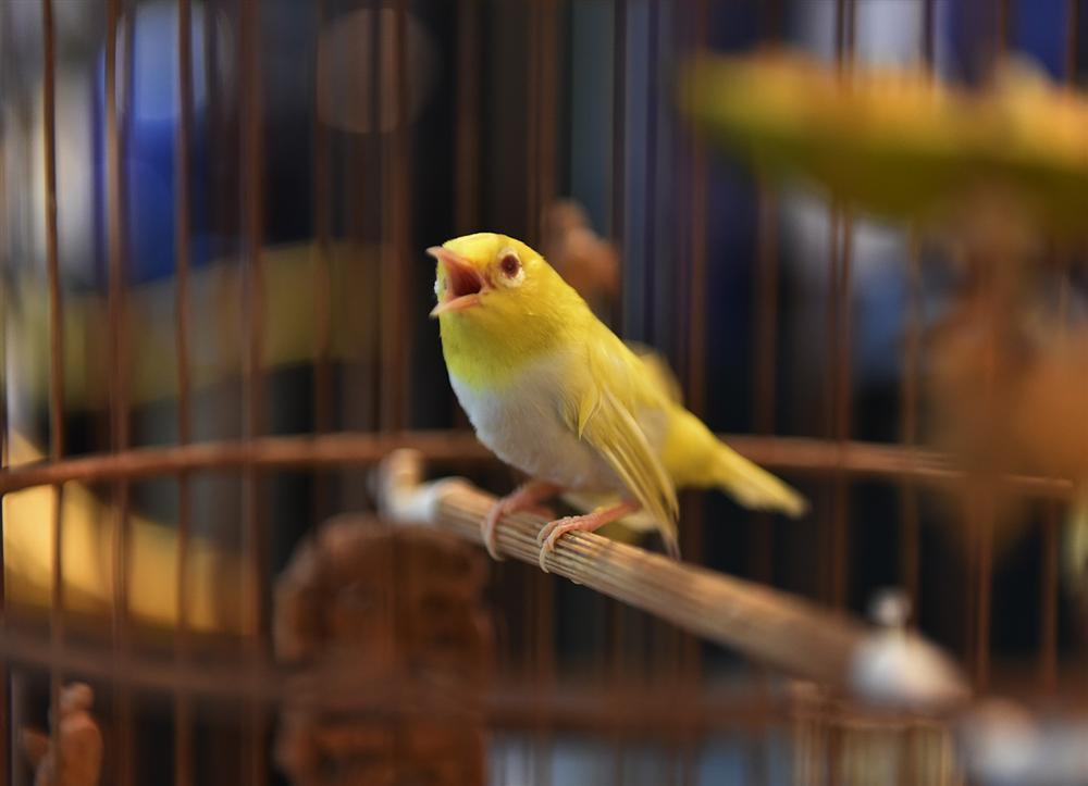 Mãn nhãn bộ sưu tập chim quý hiếm, giá tiền tỷ của vua chim màu Việt-3