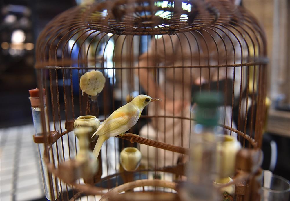 Mãn nhãn bộ sưu tập chim quý hiếm, giá tiền tỷ của vua chim màu Việt-5