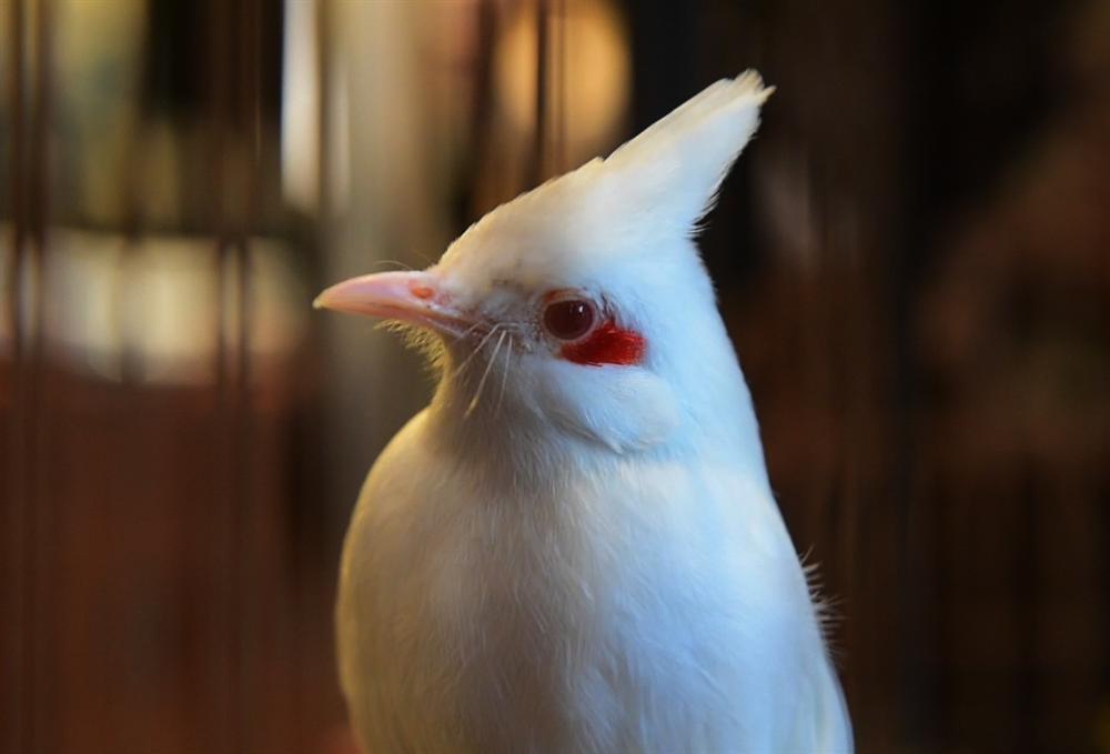 Mãn nhãn bộ sưu tập chim quý hiếm, giá tiền tỷ của vua chim màu Việt-6
