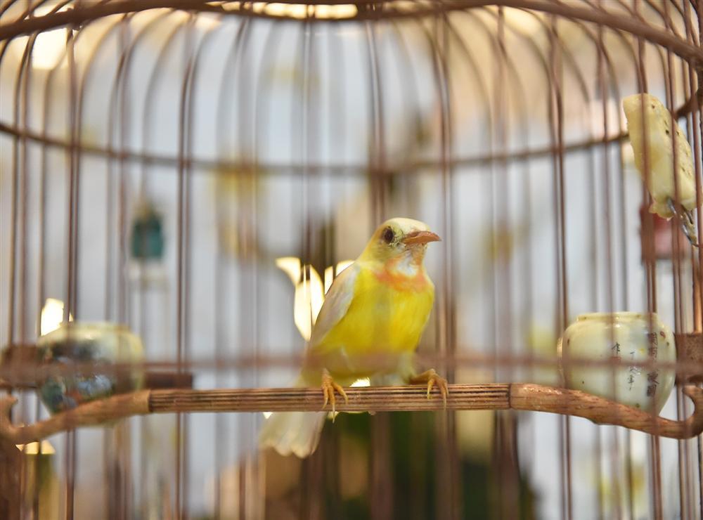 Mãn nhãn bộ sưu tập chim quý hiếm, giá tiền tỷ của vua chim màu Việt-8