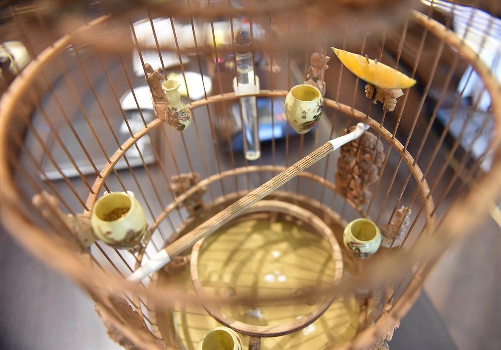 Mãn nhãn bộ sưu tập chim quý hiếm, giá tiền tỷ của vua chim màu Việt-9