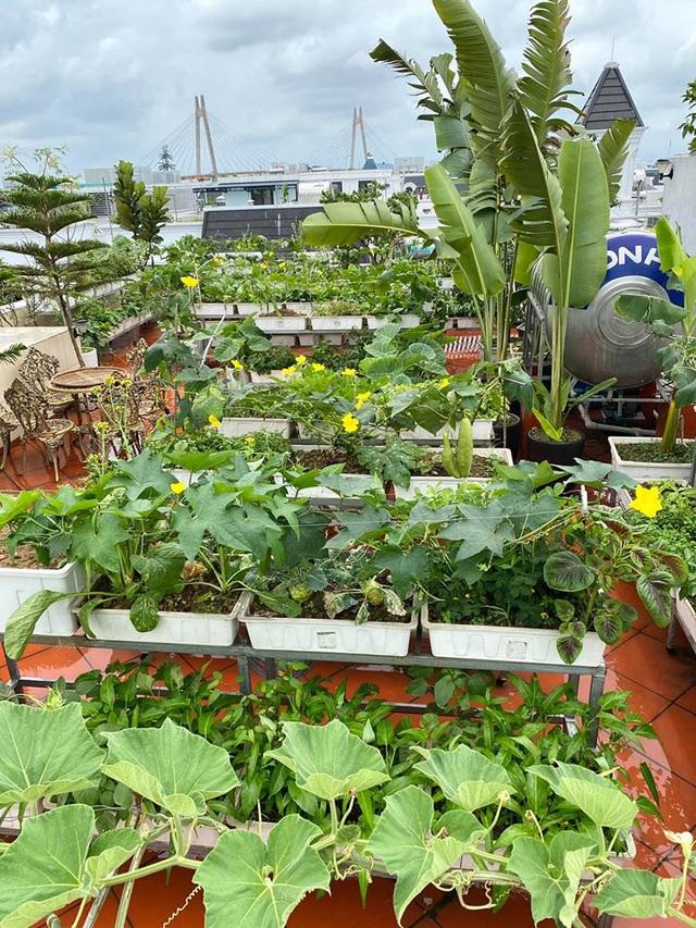 Mẹ đảm Hải Phòng trồng rau, nuôi cá trên sân thượng biệt thự triệu USD-2