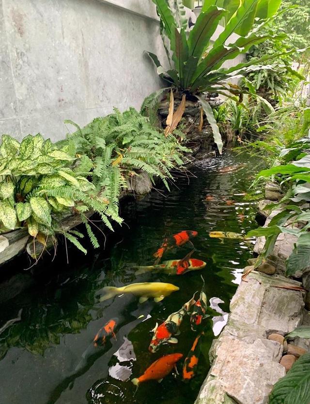 Mẹ đảm Hải Phòng trồng rau, nuôi cá trên sân thượng biệt thự triệu USD-8