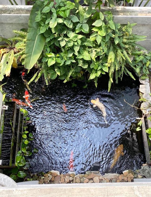 Mẹ đảm Hải Phòng trồng rau, nuôi cá trên sân thượng biệt thự triệu USD-9
