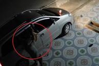 Trộm lái ôtô bắt trộm chó