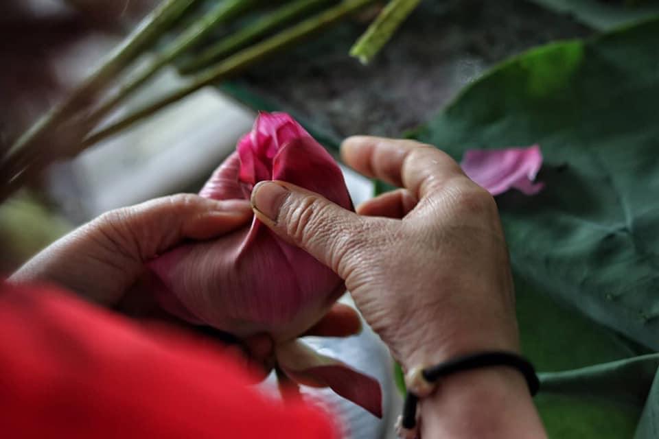Mùa sen về, trà ướp bông sen tươi 40 ngàn/bông đắt khách, người làng sen Tây Hồ ngày bán gần 1000 bông cho khách mang đi biếu-5