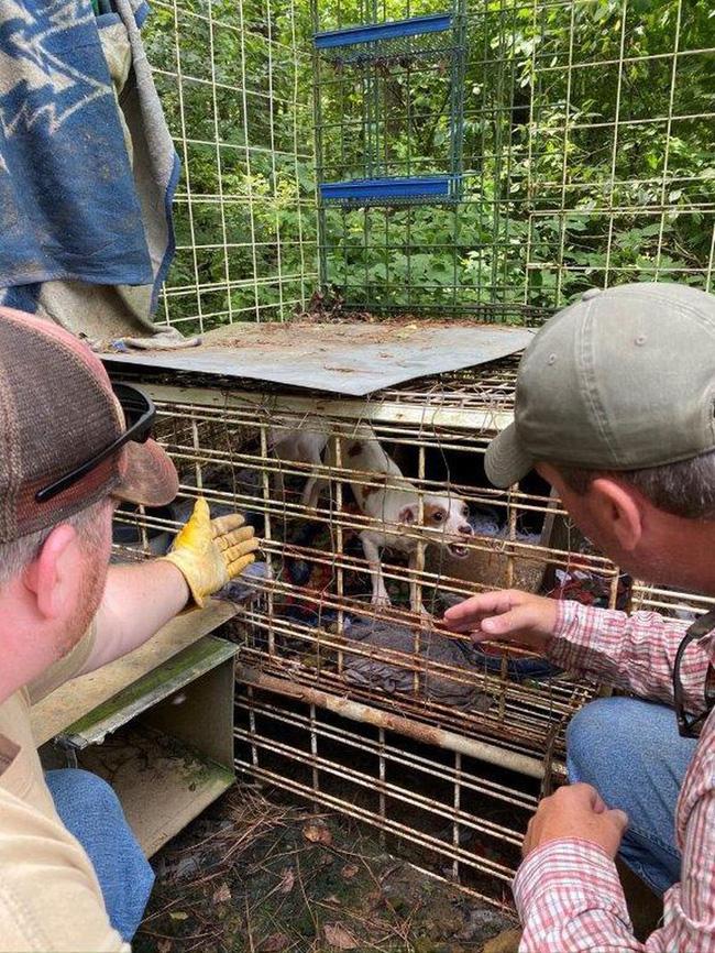 Sốc: Bé trai 18 tháng tuổi bị mẹ và người thân nhốt trong chuồng chó bẩn thỉu với hàng trăm con vật khác từ rắn, chuột đến thỏ, gà-3