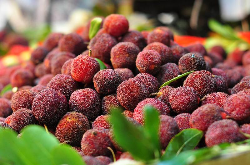 Loạn giá bán quả thanh mai cuối mùa trên chợ mạng: Nơi 30 ngàn/kg, nơi rao tận 70 ngàn-1