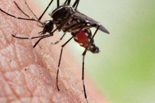 Tử vong vì nhiễm loại virus bí ẩn lây truyền qua muỗi đốt