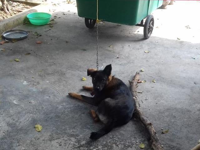 Hy hữu: 2 gia đình kiện nhau từ xã lên tới tỉnh để giành quyền nuôi... một con chó-1