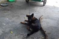 Hy hữu: 2 gia đình kiện nhau từ xã lên tới tỉnh để giành quyền nuôi... một con chó