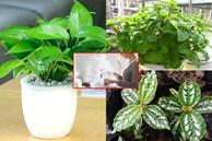 Nhà bếp nặng mùi dầu mỡ, trồng ngay những loại cây này vừa làm sạch không khí lại còn ngăn ngừa vi khuẩn