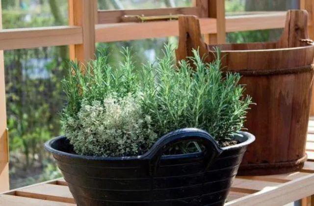 Để 4 loại cây này trong nhà, vừa hợp phong thủy vừa đảm bảo không còn con muỗi nào bén mảng-3